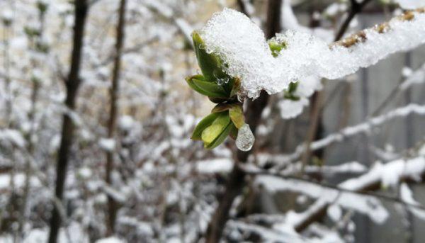 +22 і мокрий сніг: погода в Україні шокує аномалією
