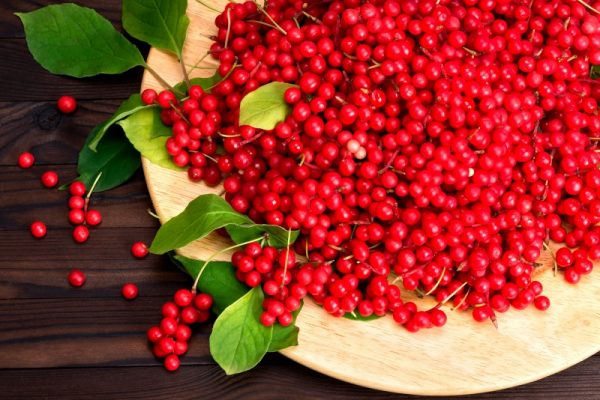 Прикарпатець успішно вирощує ягоду бадьорості