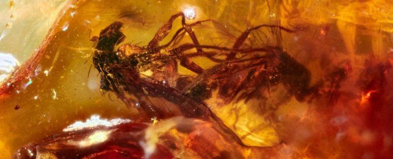 Сцена сексу: знайдено стародавній бурштин із парою мух