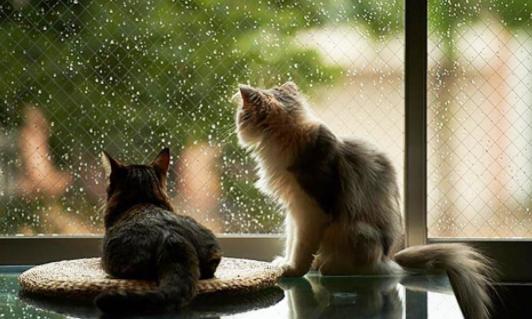 Похолодання та опади: синоптики обіцяють дощі із мокрим снігом і нічні морози