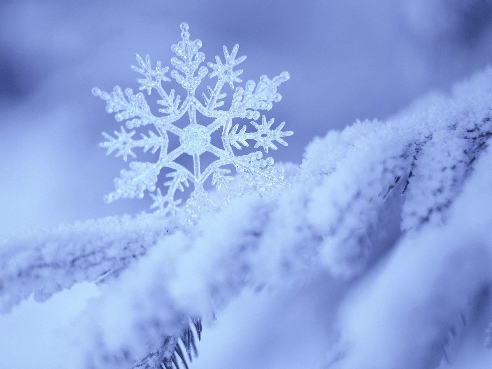 Зима повертається в Україну: вдарять морози і засніжить