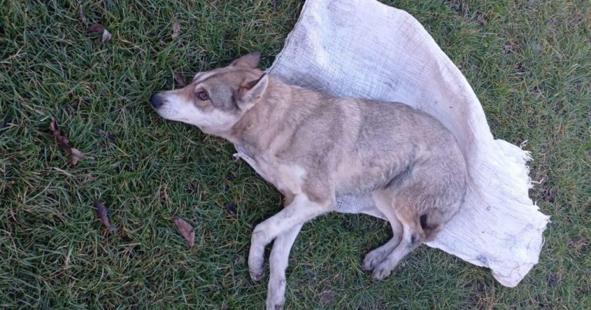 Запхнули у мішок та били до смерті: На Львівщині розшукують підлітків, які знущалися з собаки