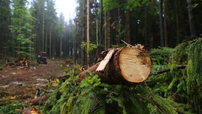Уряд значно обмежив вирубку лісів у Карпатах