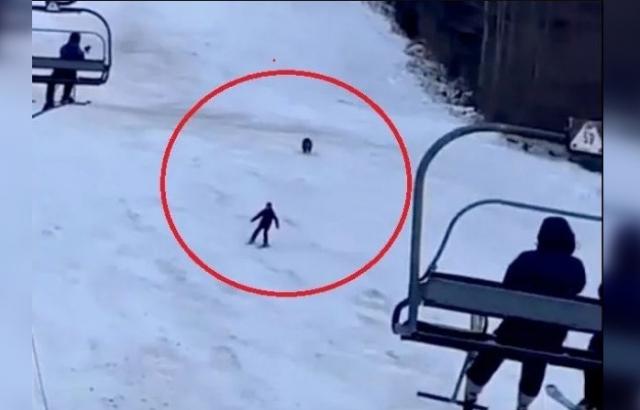 На гірськолижному курорті у Карпатах ведмідь гнався за туристом. Відео