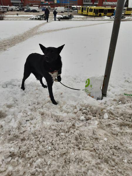 У Львові чоловік кинув собаку помирати на морозі, залишивши з нею записку: відео